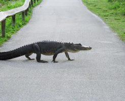 ワニ 恐竜 違い 生き残り