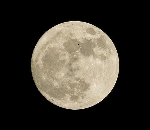 月 ワニ 模様